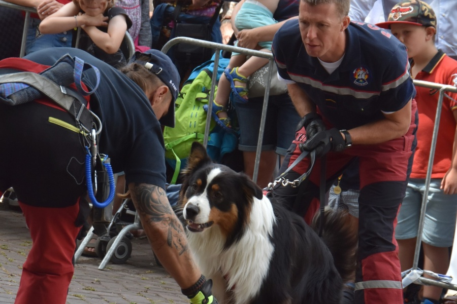 Demonstration Rescue Dogs